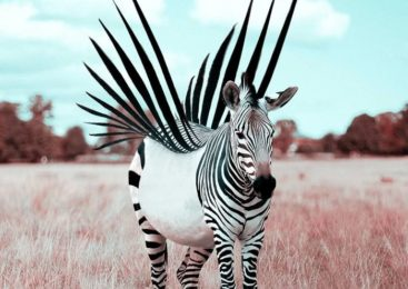 25 Fotomontajes de Animales con Photoshop