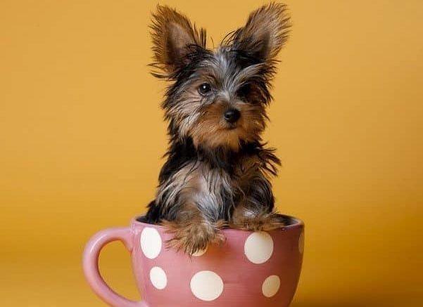 Imagenes de perros pequeños diseños creativos portada