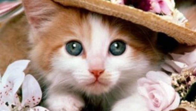 fotos de gatos lindos www.diseñoscreativos.com portada
