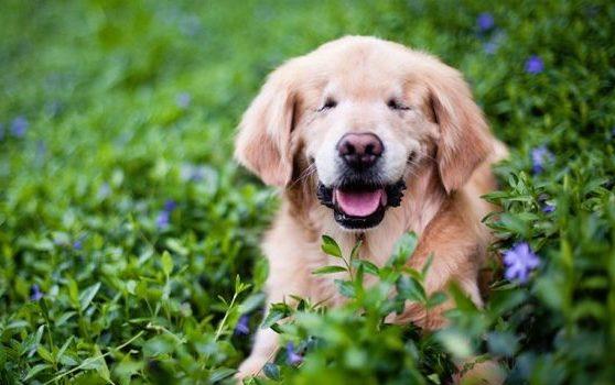 imagenes de perros medianos diseños creativos portada 1