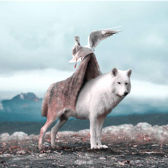 Fotomontajes de animales en photoshop Diseñoscreativos.com