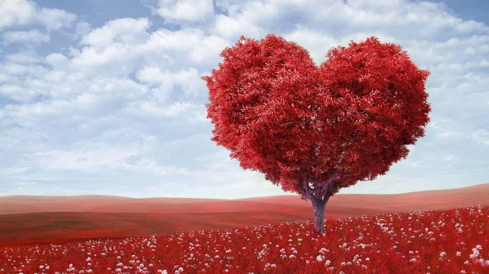 Imagenes de amor bonitas para dedicar diseños creativos