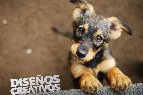 Imagenes de perros diseños creativos