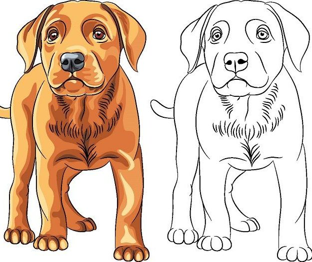 dibujos de perros para colorear diseñoscreativos.com portada